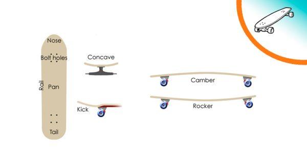 Le caratterisitche e le parti di una tavola da skate, imparare a consocere le tavole aiuta a scegliere il longboard migliore